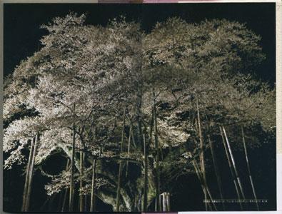 桜伝奇 日本人の心と桜の老巨木めぐり[image3]