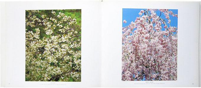 櫻 CHERRY BLOSSOMS[image2]