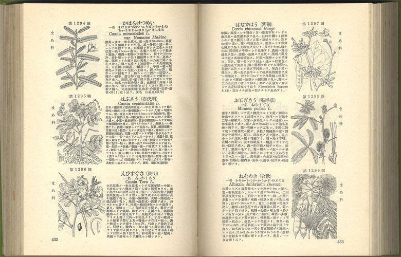 牧野日本植物圖鑑 改訂版[image4]