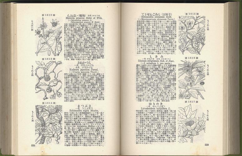 牧野日本植物圖鑑 改訂版[image5]