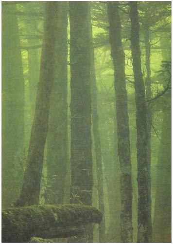 国立公園写真集 山紫水明[image4]