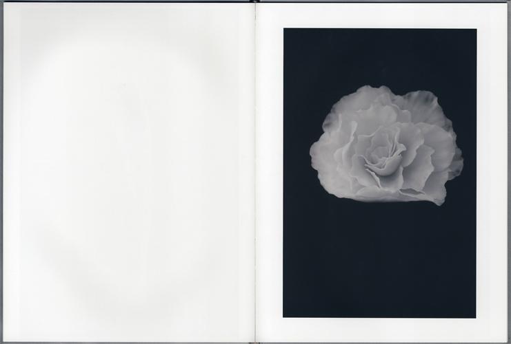 殻のない種[image5]