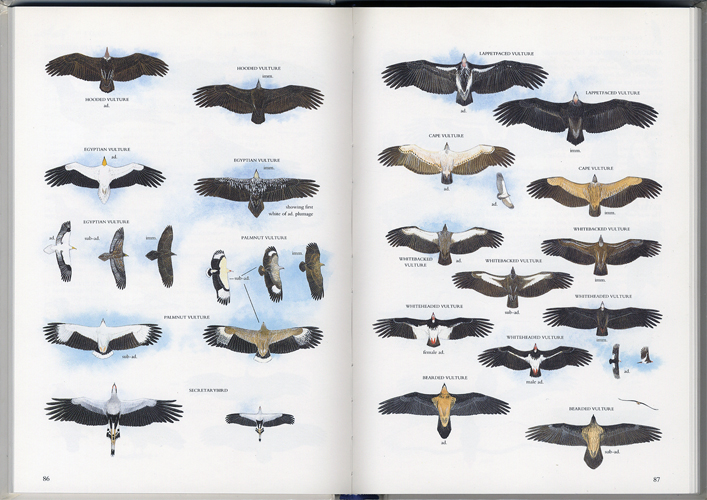 Illustrated Guide to the Birds of Southern Africa[image2]
