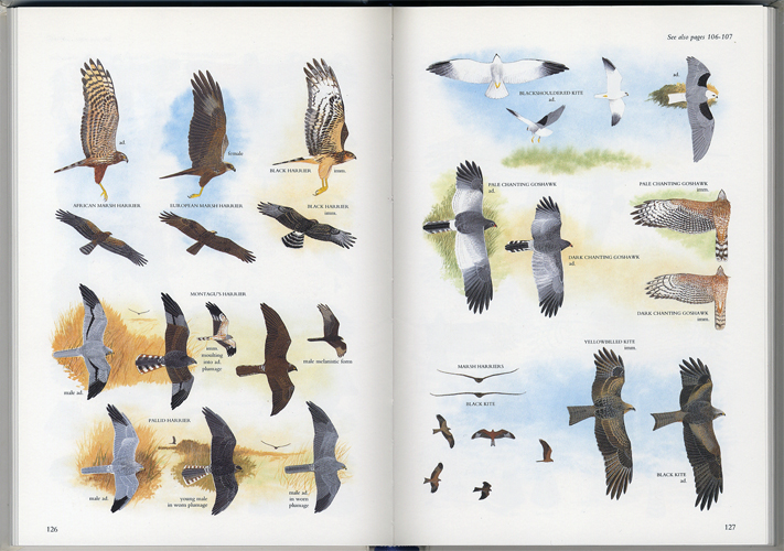 Illustrated Guide to the Birds of Southern Africa[image3]