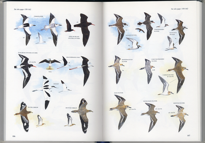 Illustrated Guide to the Birds of Southern Africa[image4]