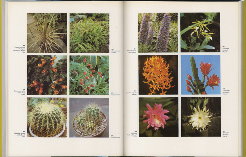 The Dictionary of Indoor Plants in Color[image3]