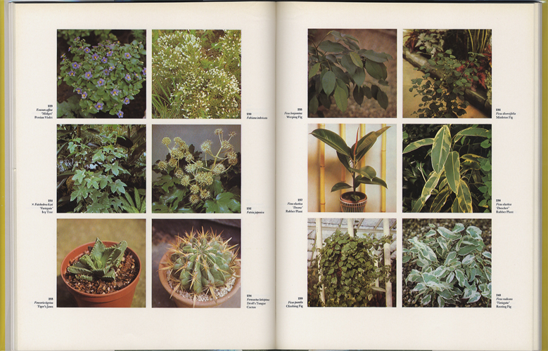 The Dictionary of Indoor Plants in Color[image4]