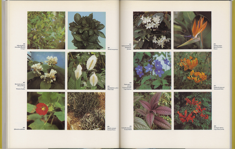 The Dictionary of Indoor Plants in Color[image5]