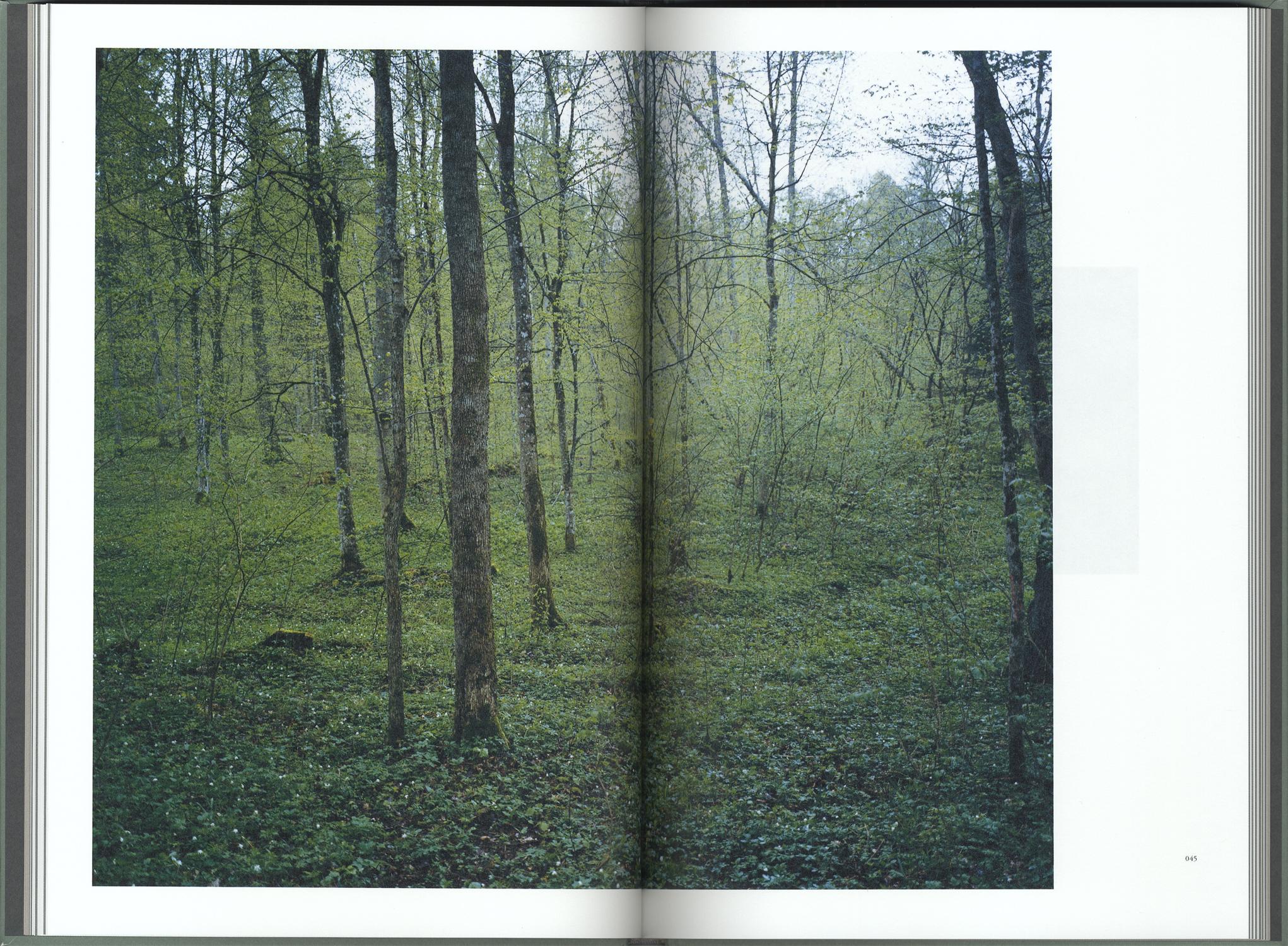 Elnias Forest エリナスの森[image3]
