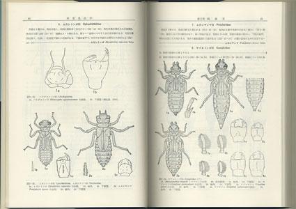 水生昆虫学 AQUATIC ENTOMOLOGY[image3]