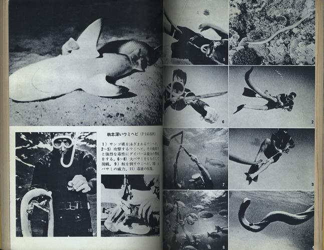 シャーク・ハンター 鮫狩り[image3]