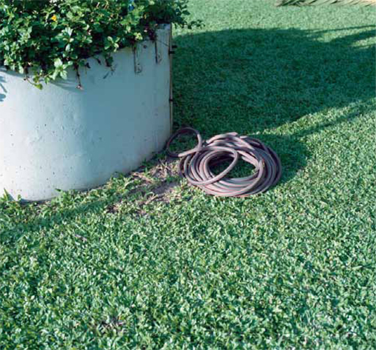 VARIOUS SHAPED HOSES AND SNAKE[image3]